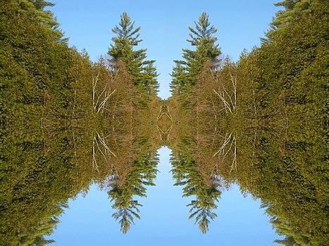 Sky Pines II by Jon Glynn