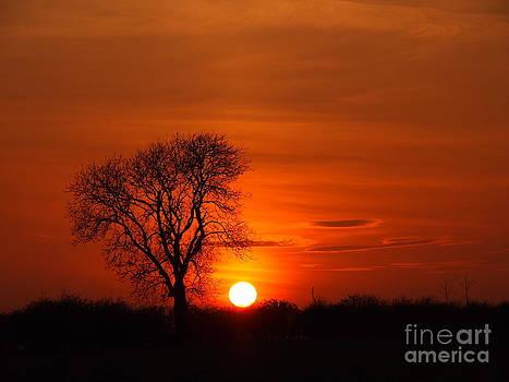 Skyblaze Tree Silhouette by Elizabeth Debenham