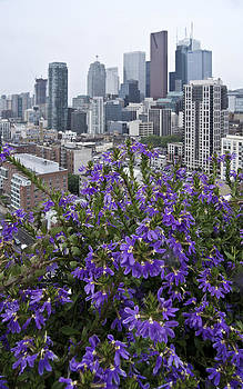 Arkady Kunysz - Skyline behind flowers