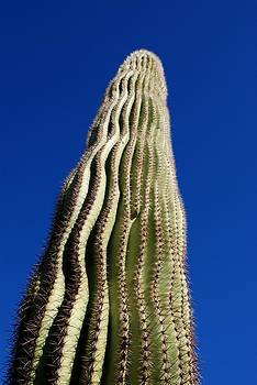 Skyward Saguaro by T C Brown