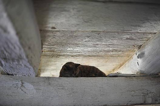 Terry DeLuco - Sleeping Barn Cat
