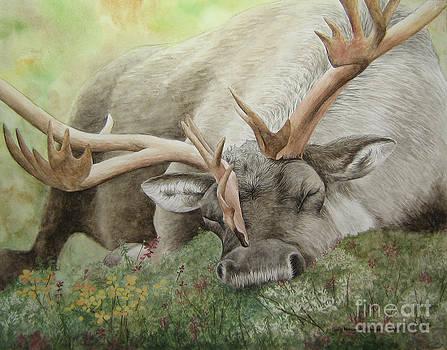 Sleeping Caribou by Sara Alexander Munoz