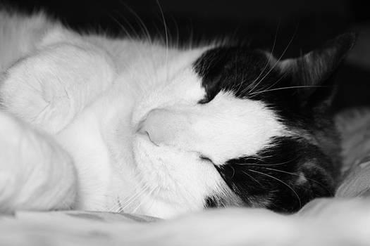 Sleeping Kitty by Tami Rounsaville