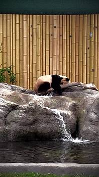 Sleeping Panda by Ted Mahy