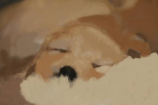 Sleeping puppy by Marta Alfred
