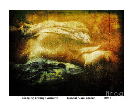 Sleeping Through Autumn by Donald Yenson