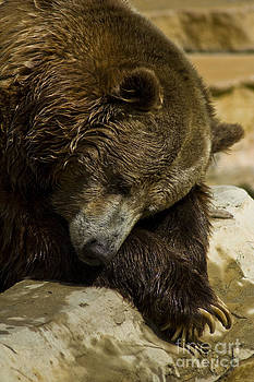 Sleepy Bear by Margaret Guest
