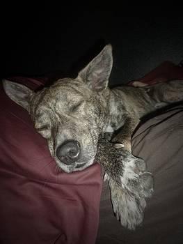 Sleepy Brindle by Montana Wilson
