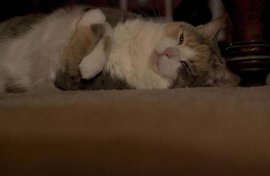 Sleepy Cat by Brad Emerick