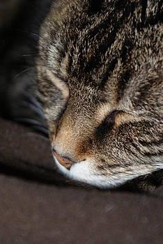 Sleepy Cat by Fabian Cardon