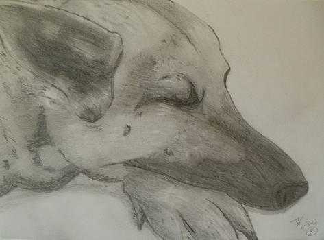Thomasina Durkay - Sleepy Shepherd
