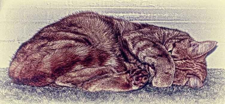 Sleepy Sophie by Dan Quam