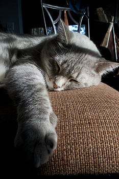 Sleepy Time by Matt Radcliffe