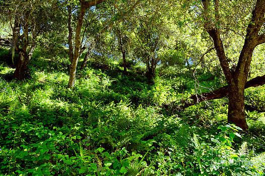 Sleepy Valley oaks by Gary Brandes