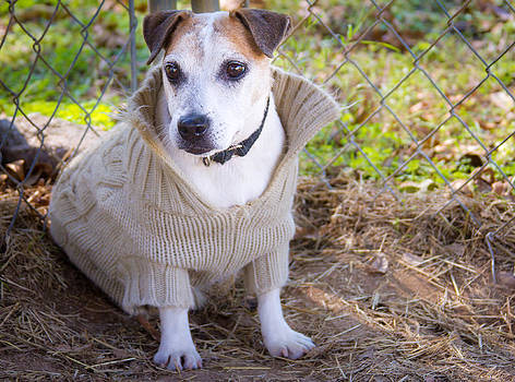 Slick in a Sweater by Soccer Dog Design
