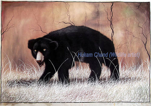 ''sloth Bear In Hunting Position'' by Hukam Chand Wildlife artist