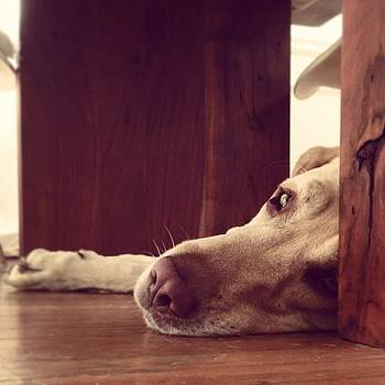 Slow Days Gone By. #dogs #tired by Barrett Wilson