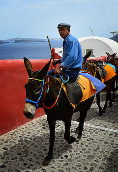 Slow Ride on a Santorini Donkey by Jack Daulton