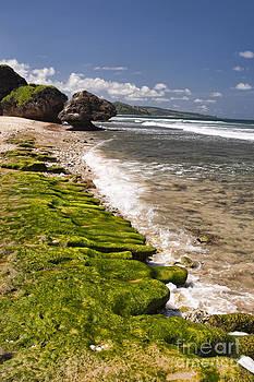 Darcy Michaelchuk - Small Barbados Waves