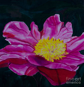 Small Pink Camellia from Emil Nolde Gardens by Goodson Kathy