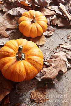 Sandra Cunningham - Small pumpkins on fall leaves