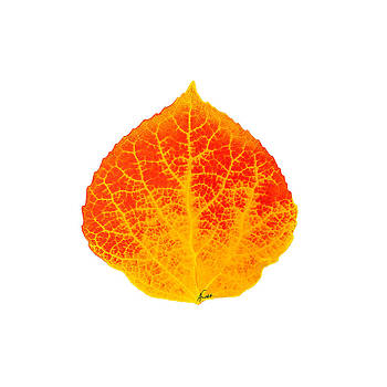 Small Red and Yellow Aspen Leaf 1 - Print Version by Agustin Goba