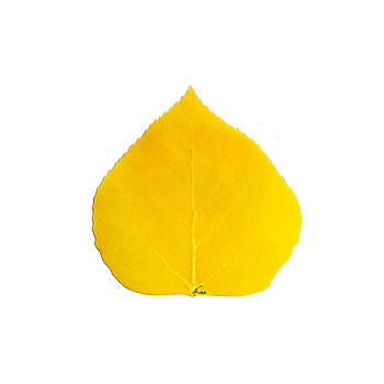 Small Yellow Aspen Leaf 1 - Print Version by Agustin Goba