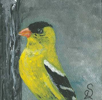 Small Yellow Finch by Sarah Lowe