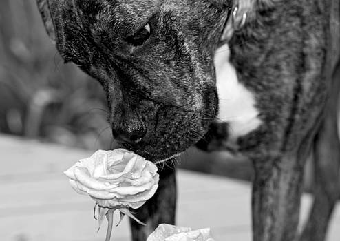 Smell The Roses by Jennifer Kelly