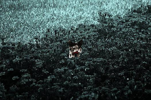 Smelling a red flower Emerald by Luis Fernando Del Aguila Mejia