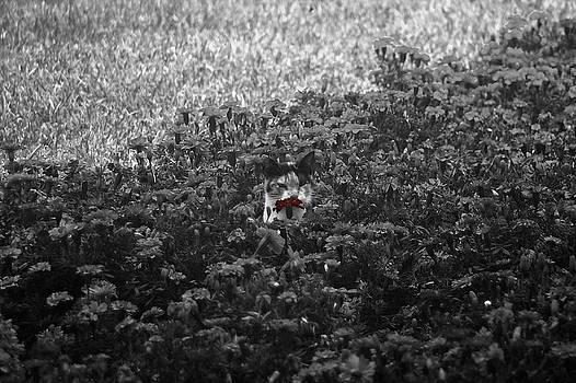 Smelling a red flower by Luis Fernando Del Aguila Mejia