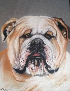 Smiling Bull Dog by Marilyn Williscroft