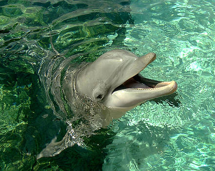 Smiling Dolphin by Douglas Martin