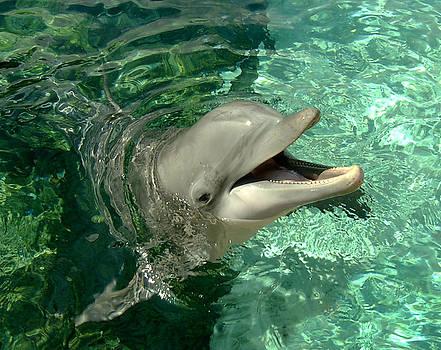 Douglas Martin - Smiling Dolphin