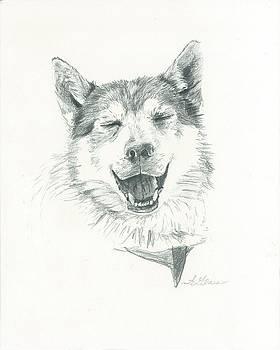 Smiling Husky by Sarah Bevard