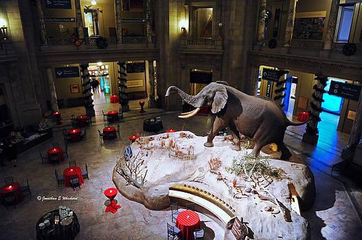 Jonathan E Whichard - Smithsonian Rotunda Museum of Natural History