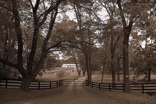 Smoke Tree Farm  by M Hess