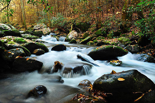 Smokey Mountain Creek by Don and Bonnie Fink