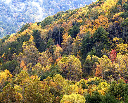 Smoky Mountain Color by Thom Tapp