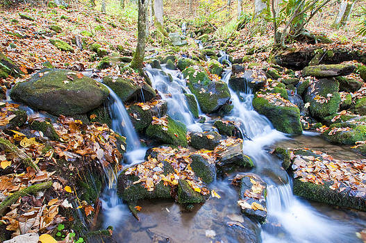 Dennis Cox - Smoky Mountains Stream