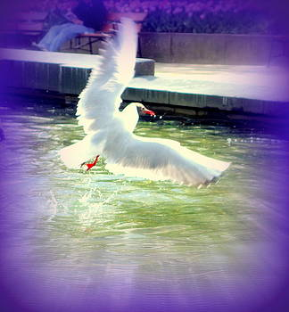 The Seagull Manage To Do A Smooth Landing In The City  by Hilde Widerberg