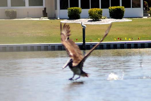 Smooth Landing by Marcia Crispino