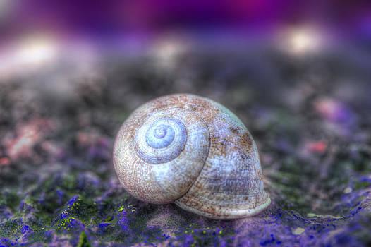 Snail House by Martin Joyful