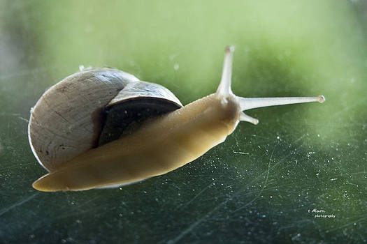 Snail on the Green by Teresa Dixon