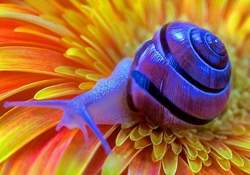 Snail Pondering On A Flower by Leslie Crotty