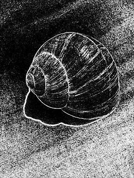 Drinka Mercep - Snail Shell Black and White Art No.11