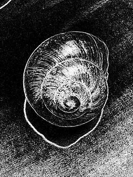 Drinka Mercep - Snail Shell Black White Stiil Life No.3