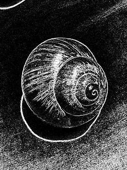 Drinka Mercep - Snail Shell Black White Still Life No.5