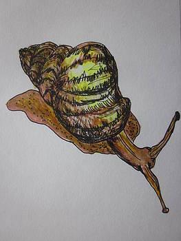 Cherie Sexsmith - snail sketch