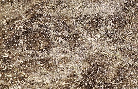 Dawn Hagar - Snail trails